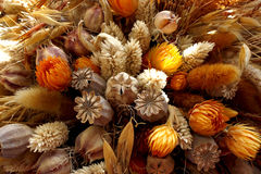 Detail of dried flowers Stock Photo