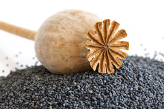 Detail of dried poppy seed pod resting on heap of seeds. Stock Photo