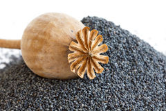 Detail of dried poppy seed pod resting on heap of seeds. Royalty Free Stock Photos