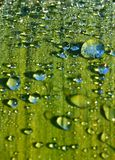 Detail droplets on leaf of plant royalty free stock photo