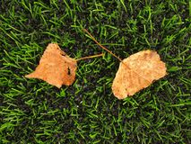 Detail of dry birch fall leaf on plastic grass field on football playground. Artificial grass Stock Photography