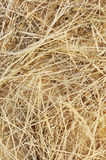 Detail of dry grass hay background Royalty Free Stock Photos