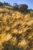 Detail of dry grasslands Stock Photos