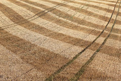 Detail of dry harvested agriculture field Stock Photos