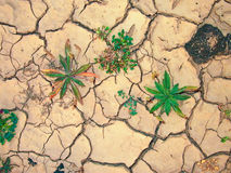 Detail of dry loam earth. Earth is cracked by heat and dryness but flowers are coming back Royalty Free Stock Images