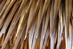 Dry palm leaves background. Detail of dry palm leaves background Royalty Free Stock Images