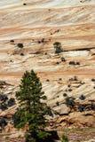 Detail, dwars huidige lagen van rood zandsteen, Stock Afbeelding