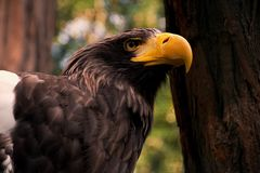 Detail on Eagle Royalty Free Stock Photos