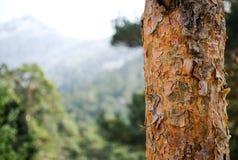 Detail einer Baumrinde stockbild