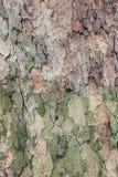 Detail einer braunen und grünen Rinde Lizenzfreies Stockfoto