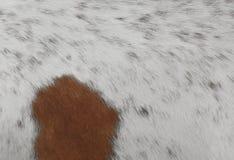Detail einer Haut eines Kuh-Beschaffenheits-Hintergrundes Lizenzfreie Stockbilder
