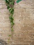 Detail einer Wand des grauen Steins Lizenzfreie Stockfotografie