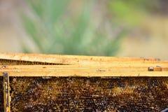 Detail eines Abteilungsbretten-una colmena, ein Imker, der die Extraktion des Honigs vorbereitet Lizenzfreie Stockfotos