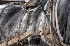 Detail eines Arbeitspferds Stockbilder