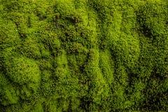 Detail eines Baums, Beschaffenheitsphotographie, mit grünem Moos, lizenzfreie stockfotografie