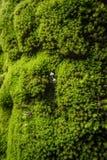Detail eines Baums, Beschaffenheitsphotographie, mit grünem Moos, lizenzfreie stockbilder