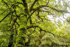 Detail eines Baums, Beschaffenheitsphotographie, mit grünem Moos, stockbild