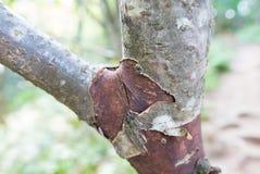 Detail eines Baumstammes Stockfotos