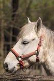 Detail eines Camargue-Pferds lizenzfreie stockbilder