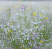 Detail eines Feldes der wilden Blume stockbild