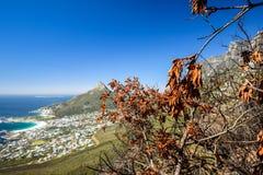 Detail eines gebrannten Baums nach einem Bushfire gesehen an Kasteelspoort-Wanderweg, Teil des Tafelberg-Nationalparks lizenzfreie stockfotos