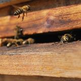 Detail eines hölzernen Bienenbienenstocks mit Fliegenbienen Stockfotos