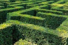 Detail eines lebenden Zauns formte als Labyrinth stockbilder