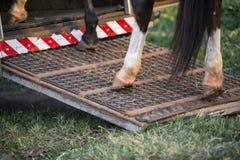 Detail eines Pferds Stockfoto