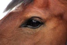 Detail eines Pferds Lizenzfreies Stockfoto