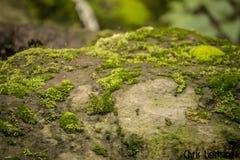 Detail eines Steins, Beschaffenheitsphotographie, mit grünem Moos, lizenzfreie stockbilder