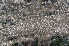 Detail eines Vogelschutzgebiets in sieben Inseln Lizenzfreies Stockbild