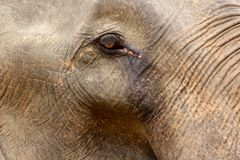 Detail of an elephant eye Royalty Free Stock Photography