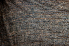 Detail of an elephant's skin Royalty Free Stock Photography