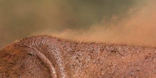 Detail of the elephant`s skin Stock Photos