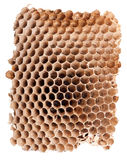 Detail of a empty hornet nest Royalty Free Stock Photos