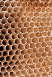 Detail of a empty hornet nest. Hornet nest close up  on white Stock Photography