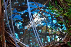 Design landscaping:Detail of en eye in a plantsculpture Royalty Free Stock Images