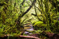 Detail of the enchanted forest in carretera austral, Bosque encantado Chile royalty free stock image