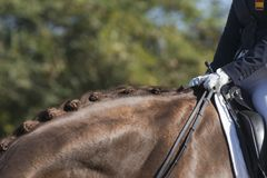 Detail of equine button braids in dressage. Competition in Cadiz Stock Photo