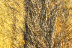 Detail of eurasian lynx leather. Ready for your design, closeup of textured pattern of animal skin Stock Photo