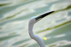 Detail of exotic bird, Srí Lanka Royalty Free Stock Image