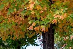 Detail-Fallfarbe Stockfotos