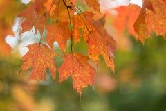 Detail-Fallfarbe Lizenzfreie Stockfotos