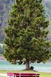 Detail farbiger Baum am See Lizenzfreie Stockfotos
