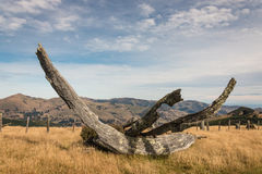 Detail of felled tree Royalty Free Stock Photos