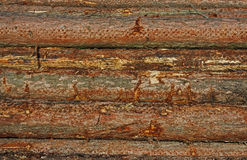 Detail of felled tree stump, wood grain. Stock Photography
