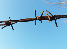 The detail fence with barbed wire Royalty Free Stock Photography