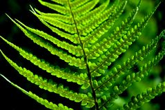 Detail of a fern Stock Images