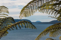 Detail of fern fronds. With lake Tarawera in background stock image