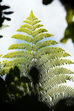 Detail of fern leaf Stock Image